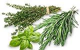 Trio de graines Aromatiques à semer : Thym Romarin Basilic