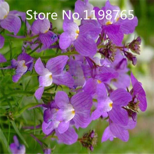 Amarillo: ¡Promoción de precio especial! 100 semillas de