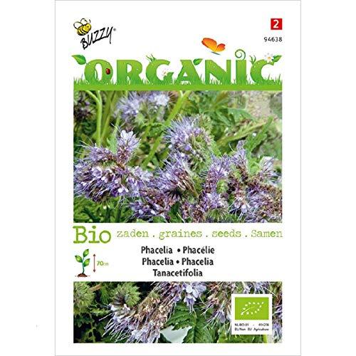 Buzzy® Phacelia organique (Phacelia tanacetifolia)