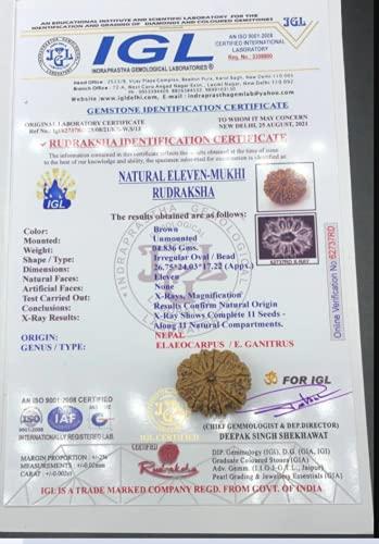11 Mukhi Nepal Rudraksha 26,75 mm 4,83 g/m²/once caras/Lord Hanuman Collector Rare Bead con 11 semillas de cuentas exactas certificadas IGL