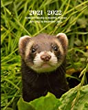 2021 - 2022 18 Month Weekly and Monthly Planner July 2021 to December 2022: Ferret- Monthly Calendar with U.S./UK/ Canadian/Christian/Jewish/Muslim ... in Review/Notes 8 x 10 in.- Humor -Gag Gift