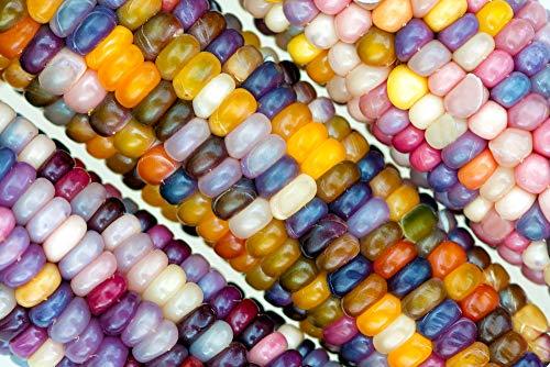 Bunter Mais,Glass Gem Corn 10 Samen,Röstmais