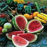 Shop Meeko Watermelon - Sugar Baby - 100 Samen -