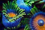 Kunst für Alle Impresión artística/Póster: Santiago Pascual Buyé The Colors of The Reef II - Impresión, Foto, póster artístico, 100x65 cm