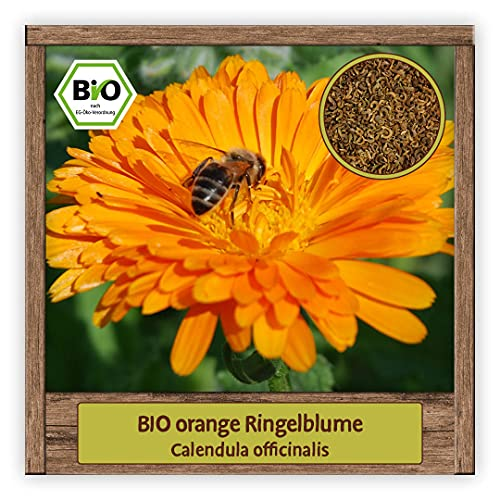 BIO Ringelblume Samen Sommerblumen Saat (Calendula officinalis) Blumensamen Schnittblume mit essbaren Blüten