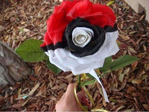200pcs 24 Type de Rose Seeds Rare Belle semences de fleurs Balcon et cour d'ornement Bonsai Graines croissance naturelle Pour jardin Ciel bleu