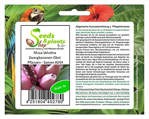 Stk - 6x Musa Velutina Zwergbananen Obst Pflanzen - Samen #244 - Seeds Plants Shop Samenbank Pfullingen Patrik Ipsa