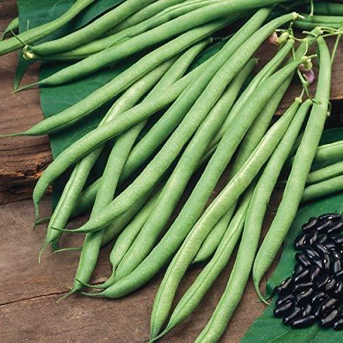 Suffolk Herbs - Graines de haricot grainé bio - Cobra