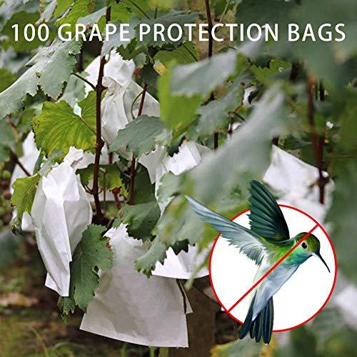 Dough.Q 100 Unids Uvas de Jardín Bolsa de Protección de Frutas para Fruta Bosque Vegetal...