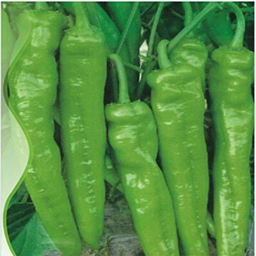 vegherb Adb Inc Anhui grüne Lange Süßes Kuh-Horn Pfeffer F1-Samen, Originalverpackung, 35 Samen