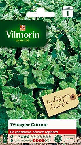 Vilmorin - Tétragone cornue- Légume d'autrefois - Se consomme comme un épinard - résistante à la chaleur et la sécheresse - idéal pour les régions chaudes - croissance rapide - rendement 2 x 2m
