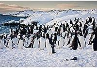 新しいOIFLAペンギンの背景7x5ft南極の写真の背景冬の湖氷山の写真雪の山自然の風景氷河の岩冬の旅行の背景アドベンチャーイベント装飾小道具