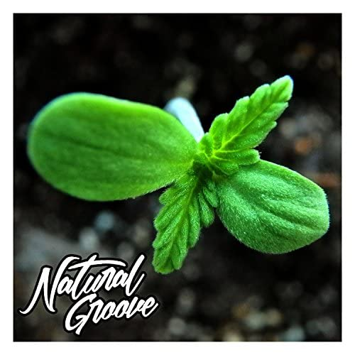 Natural Groove