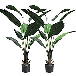 momoplant 5.25ft Artificial Banana Tree Bird of Paradise Plant Fake Tropical Palm Trees in Plastic Pot Home Office Decor Indoor Outdoor, Set of 2 (63 inch)