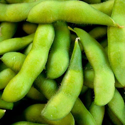 Edamame Midori gigante de soja | Certified Organic | 35 semillas frescas