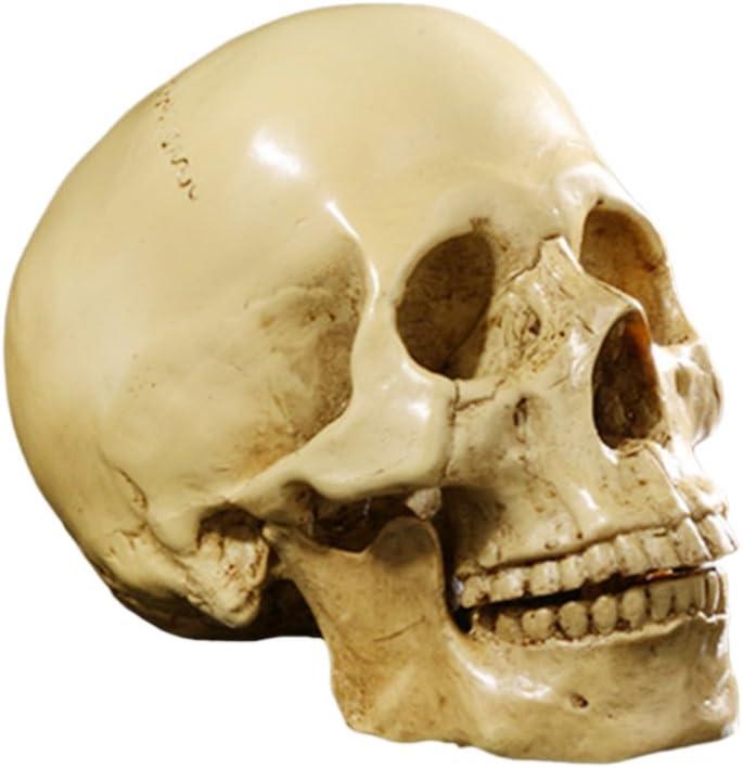 Real Raccoon Skull Creepy Skulls Morbid Skull Goth Decor Real Animal Skull Decor Skull Art Raccoon Skull Half Skull Half Face