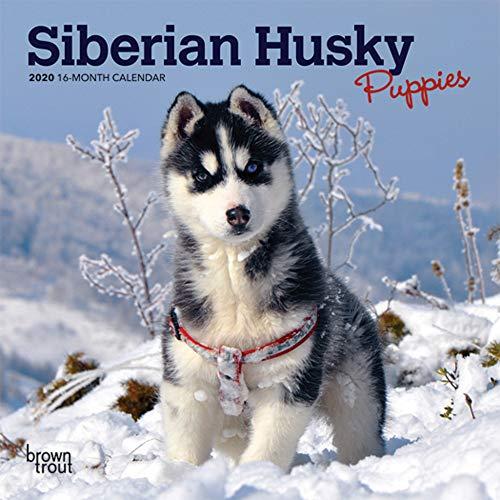 54035 sibirischer Husky//sibirian HUSKY-NUOVO Personaggio//personaggio del gioco Papo CANE