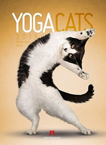 Yoga Cats 2019, Wandkalender im Hochformat (33x45 cm) - Lustiger Katzenkalender mit Fotomontagen mit Monatskalendarium