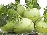 AGROBITS Semences de Légumes chou-rave 50 graines German Navet Chou ????????? ?? ????