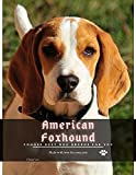 American Foxhound: Choose best dog breeds for you