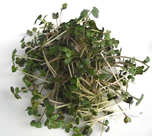250 g BIO Keimsprossen Senf Samen für die Sprossenanzucht Sprossen Microgreen Mikrogrün