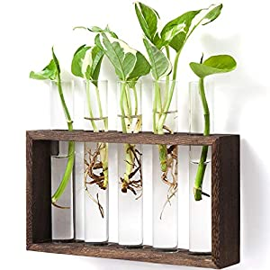 Mkono Wall Hanging Glass Planter Plant Terrarium Modern Flower Bud Vase in Wood Stand Rack Tabletop Terrarium for Propagating Hydroponic Plants, Home Office Decoration with 5 Test Tube, Medium, Brown