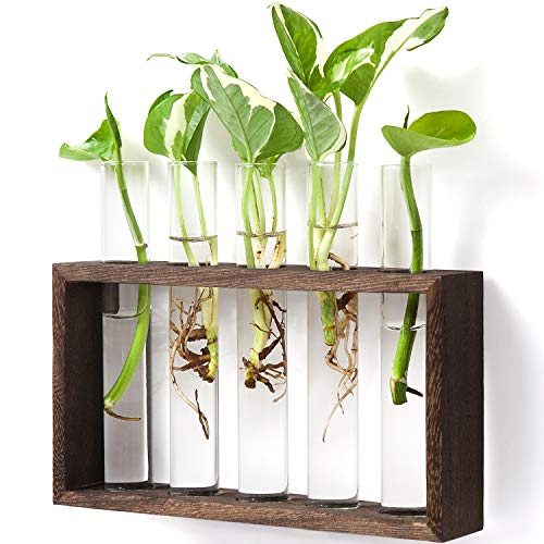 Mkono Wall Hanging Glass Planter Plant Terrarium Modern Flower Bud Vase in Wood Stand Rack Tabletop Terrarium for Propagating Hydropoinc Plants, Home Office Decoration with 5 Test Tube, Medium, Brown