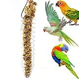Portable en acier inoxydable en spirale Mangeoire Oiseaux Parrot Nourriture pour...