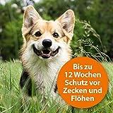 Quiko 077310 Ardap Spot on  Zecken und Flohschutz für mittelgroße Hunde, 10 – 25 kg - 5