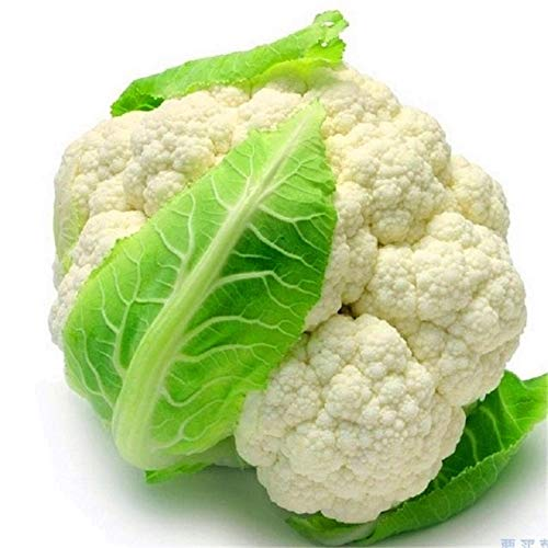 GETSO 100PCS / Bag Blumenkohl Pflanze Bonsai Mehrfarbenblumenkohl Gesunde Gemüsepflanze Köstliches Haus Gemüsegarten Topfpflanze: 2