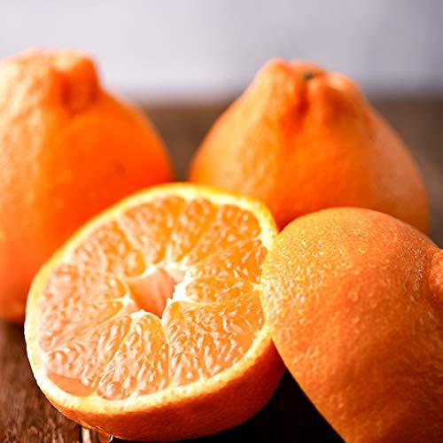 国産 ぽんかん 3kg(共選 秀品) 柑橘類 みかん ミカン 蜜柑 果物 フルーツ お取り寄せ