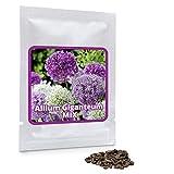 Magic of Nature Riesen Zierlauch - 60 Samen je Pack - Riesenlauch - Winterharte Zierpflanze für Deinen Garten - Violette und weiße Blütenfarbe gemischt - Allium giganteum - mehrjährig
