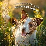 AniForte kaltgepresstes Leinöl – Naturprodukt für Hunde, Katzen & Pferde - 7