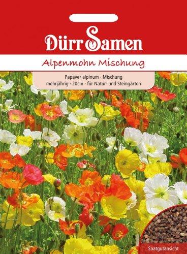 Dürr-Samen Alpenmohn Mischung