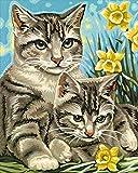 Pintar por números para Adultos Jazmín y dos gatosDIY Pintura al óleo Kit lienzos Niños y Principiantes acrilicas Cuadros Manualidades Decoracion Regalo 40x50 cm(Con marco)