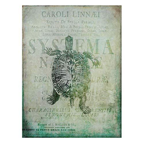 Bilderwelten Cuadro en Lienzo - Vintage Collage - Antique Turtle - 100 x 75cm - Canvas