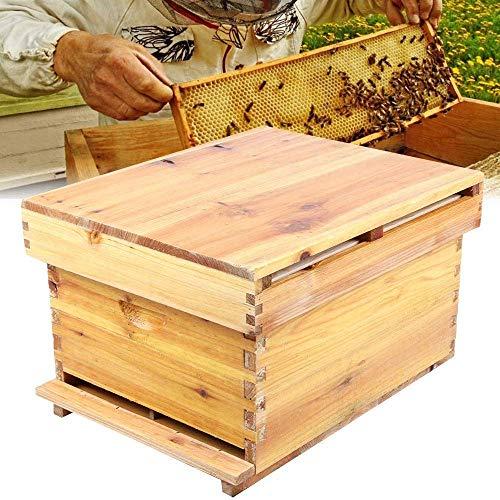 SBDLXY Beehive Honeycomb Honeycomb - Marco de Panal de Cera hervida de Abeto Chino y Juego Completo de 10 Marcos de Equipo de Apicultura