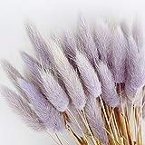 50pcs Bundle Lagurus Ovatus naturale essiccato, bouquet di erba secca Decorazione Bouquet di fiori da sposa Fiori Piante da giardino Fiori naturalmente secchi per composizione floreale DIY