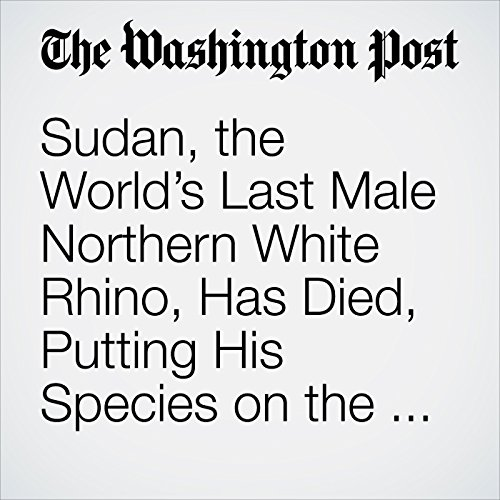 Sudan, the World's Last Male Northern White Rhino, Has Died, Putting His Species on the Brink of Extinction copertina
