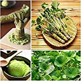 100 Samen Wasabi Samen japanischen Meerrettich Samen Gemüse Wasabia Japonica-Hausgarten Bonsaipflanzen DIY