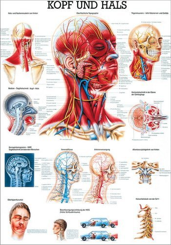 Ruediger Anatomie TA19 Kopf und Hals Tafel, 70 cm x 100 cm, Papier