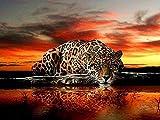 Kit de pintura de diamantes 5D,Leopardo animal cielo amarillo Taladro redondo punto de cruz, bordado, artesanía para adultos, niños, para decoración del hogar
