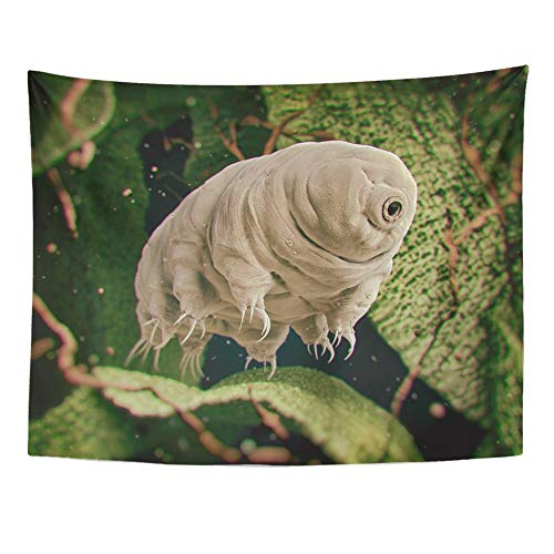 SPXUBZ Wall Tapestry Tardigrada Tardigrade Water Bear Rendered Moss Microscope Biology Eight Wall Hanging Decoration Soft Fabric Tapestry Perfect Print for House Rooms