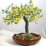 Venta grande Semillas Bonsai árbol de limón alta supervivencia Semillas Tasa de fruta de árbol para el hogar Gatden patio trasero (50Pieces) - Arcis Nuevos