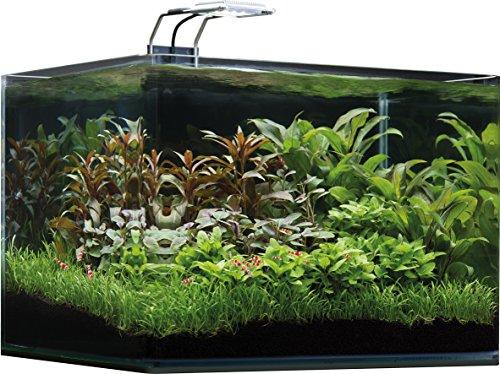 Dennerle 5592 Nano Aquarium 35 Liter – Komplett – Set | NEU - 4