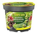 COMPO SANA Qualitäts-Blumenerde im Pflanztopf, hochwertige Universalerde im Topf zum einfachen Bepflanzen und Umtopfen, 3,5 L