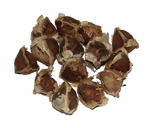 Moringa -Moringa oleifera- >>>Mengen/Stückzahl Wählbar<<< *Auch Meerrettichbaum genannt* (25)