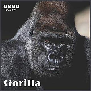 Gorilla 2021 Calendar: Beautiful Gorilla - 2021 Calendar 8.5