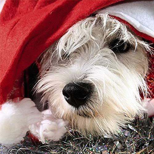 Glamour Girlz tot sluiten 3D wensen u een vrolijke kerst wenskaart honden het dragen van hoeden