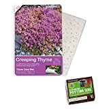 Garden Roll Out Pre-Seeded Flower Mats - Add Beautiful Flowers to Any Outdoor Living Area - Includes 1 Seed Mat and Soil Block (Creeping Thyme)
